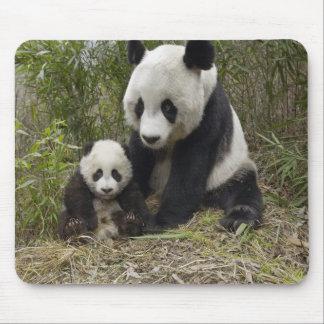 Oso de panda Momma con el cojín de ratón de Cub Tapete De Ratón