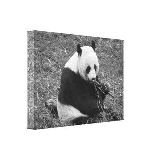 Oso de panda (negro y blanco) impresión en lienzo estirada