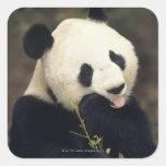 Oso de panda, (primer) calcomanias cuadradas