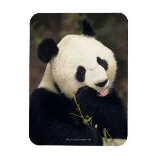 Oso de panda, (primer) imanes de vinilo