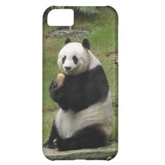 Oso de panda que come algún bambú