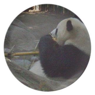 Oso de panda que come la placa plato de cena