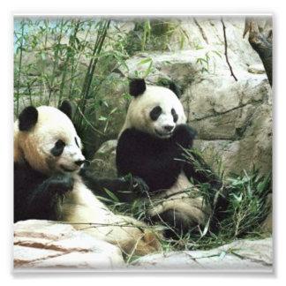 Oso de panda que come y que juega fotos