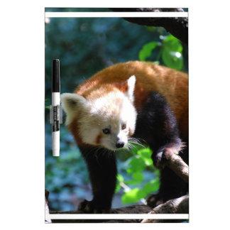 Oso de panda roja inquisitivo pizarras