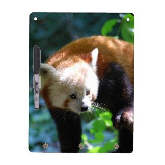 Oso de panda roja inquisitivo pizarras blancas de calidad