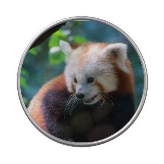 Oso de panda roja precioso latas de caramelos