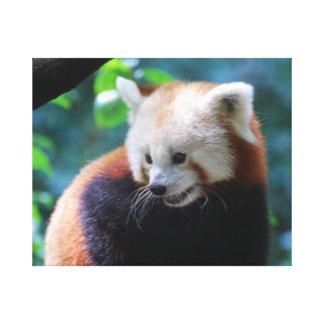 Oso de panda roja precioso impresiones en lona