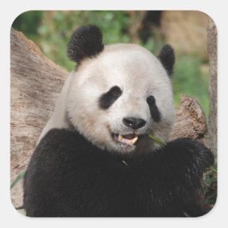 Oso de panda sonriente pegatina cuadrada