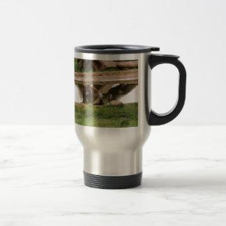 Oso del agua tazas de café