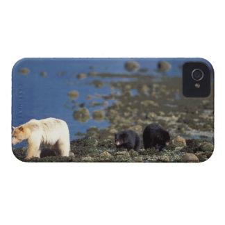 oso del alcohol, kermode, oso negro, Ursus iPhone 4 Protector