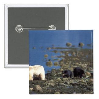 oso del alcohol, kermode, oso negro, Ursus Pin Cuadrada 5 Cm