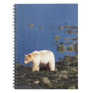 oso del alcohol, kermode, oso negro, Ursus Spiral Notebooks