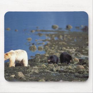 oso del alcohol, kermode, oso negro, Ursus Tapetes De Raton