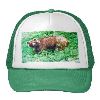 Oso en Alaska, en el gorra