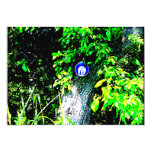 Oso en árbol invitación 12,7 x 17,8 cm