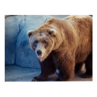 Oso grizzly 1 postales