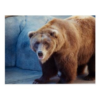 Oso grizzly 1 tarjetas postales