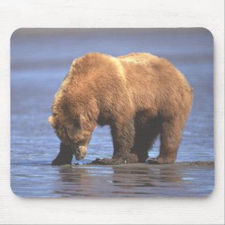 Oso grizzly 2 Mousepad Alfombrillas De Raton