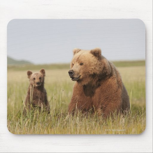 Oso grizzly con Cub Tapetes De Ratones
