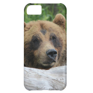 Oso grizzly de Alaska, el Kodiak
