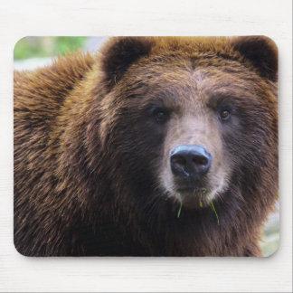 Oso grizzly de Brown Alfombrillas De Raton