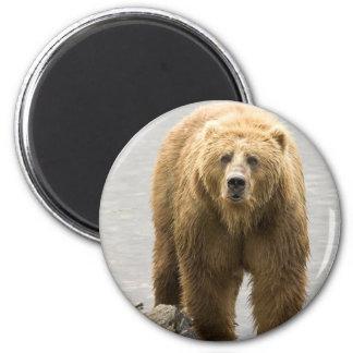 Oso grizzly en agua en el refugio del Kodiak Imán Redondo 5 Cm