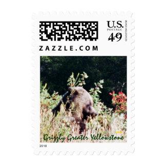 Oso grizzly en caída