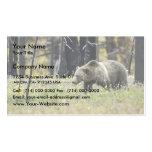 Oso grizzly en campo en el parque nacional de Yell Plantillas De Tarjetas De Visita