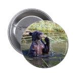 Oso grizzly en el agua pin