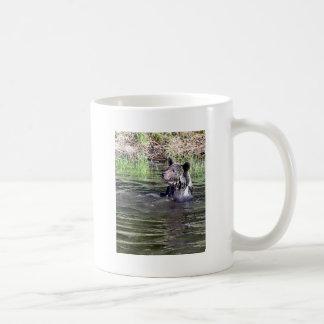 Oso grizzly en el agua taza
