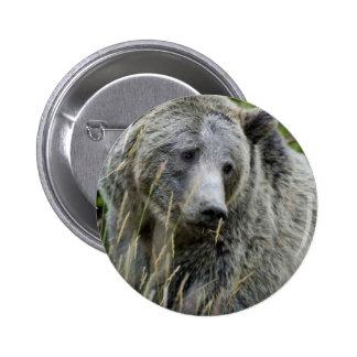 Oso grizzly en el parque nacional de Yellowstone Pin Redondo 5 Cm