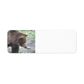 Oso grizzly etiqueta de remite