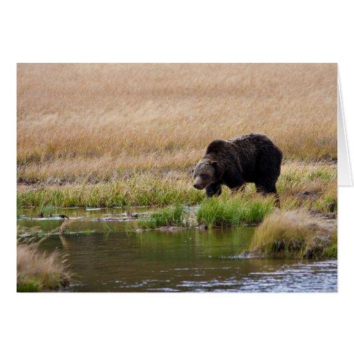 Oso grizzly felicitacion