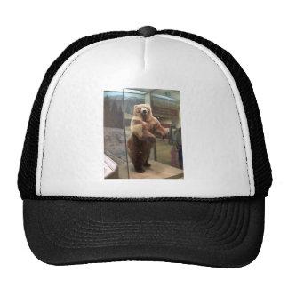 Oso grizzly gorras