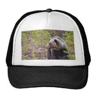 Oso grizzly gorro de camionero