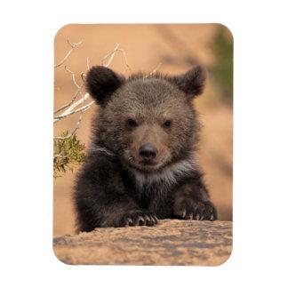 Oso grizzly (horribilis de los arctos del Ursus) Iman Flexible