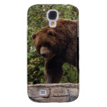 Oso grizzly i