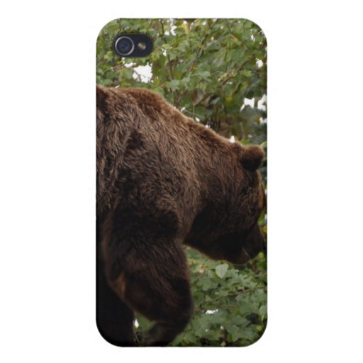 Oso grizzly i iPhone 4 funda