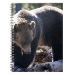 Oso grizzly libro de apuntes con espiral