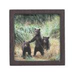 Oso grizzly, oso marrón, cachorros en hierbas alta caja de regalo de calidad