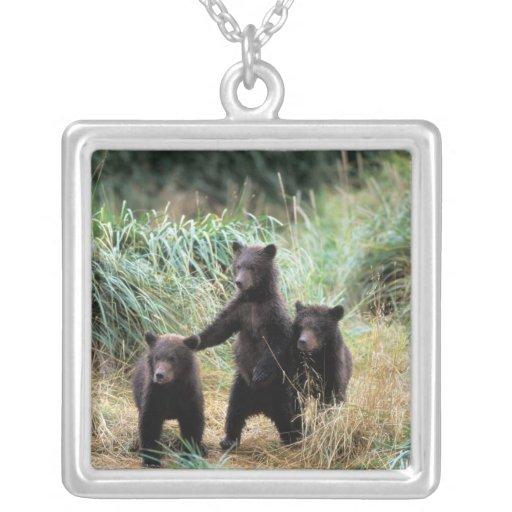 Oso grizzly, oso marrón, cachorros en hierbas alta pendientes