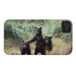 Oso grizzly, oso marrón, cachorros en hierbas iPhone 4 Case-Mate carcasas