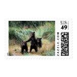 Oso grizzly, oso marrón, cachorros en hierbas sello
