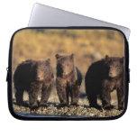 Oso grizzly, oso marrón, cachorros, nacional de Ka Fundas Portátiles