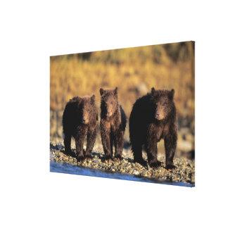 Oso grizzly oso marrón cachorros nacional de Ka Impresión De Lienzo