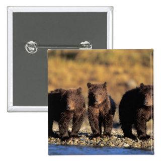 Oso grizzly, oso marrón, cachorros, nacional de Ka Pin Cuadrada 5 Cm