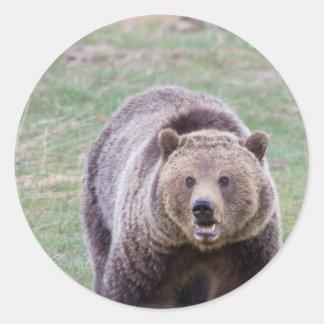 Oso grizzly etiquetas redondas