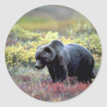 Oso grizzly pegatina redonda