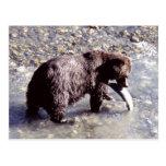Oso grizzly que coge un pescado en la isla de postal