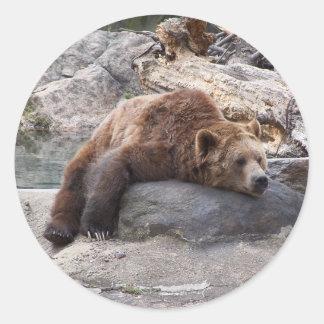 Oso grizzly que descansa sobre roca pegatina redonda